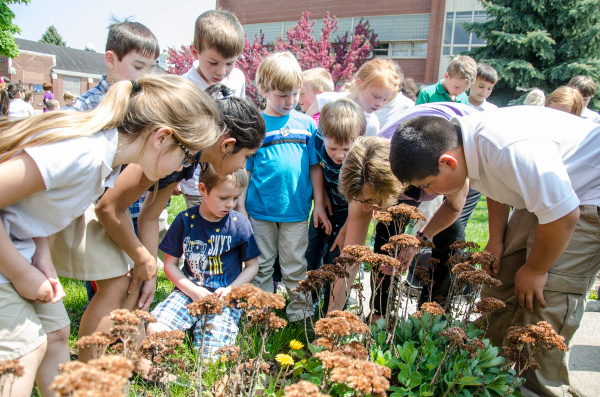 St. James students watch as a butterfly rests on plants outside St. James School in Bay City on Wednesday, May 21. The butterflies were raised by each class and released as a symbol of new life as the three local Catholic elementary school prepare to consolidate into All Saints Central Elementary. (Danielle McGrew | The Bay City Times)