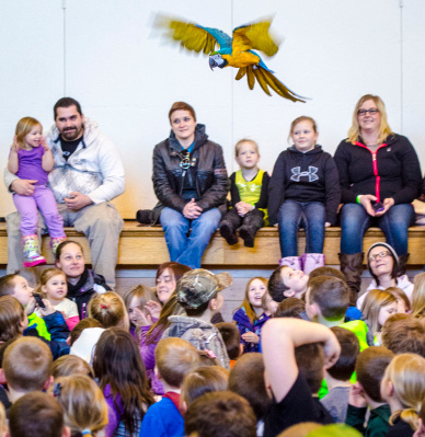 A blue-and-gold macaw named Kelly flies over the crowd during the Understanding Wildlife show  by The Rainforest Live at Bush Elementary School in Essexville on Monday, March 3.(Danielle McGrew | The Bay City Times)